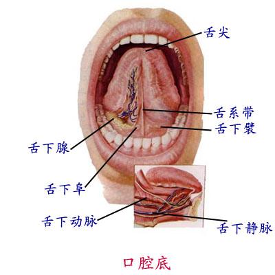 解剖学 口腔
