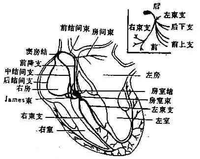 心电图纹身平面图