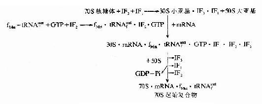 生物化學與分子生物學/蛋白質生物合成過程