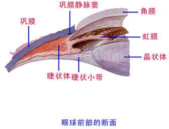 解剖学 眼球
